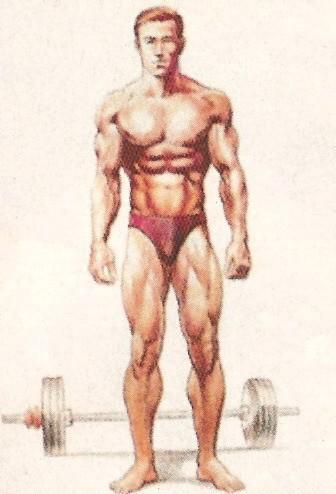 Эктоморф Узкокостный и сухой, низкий уровень подкожного жира и