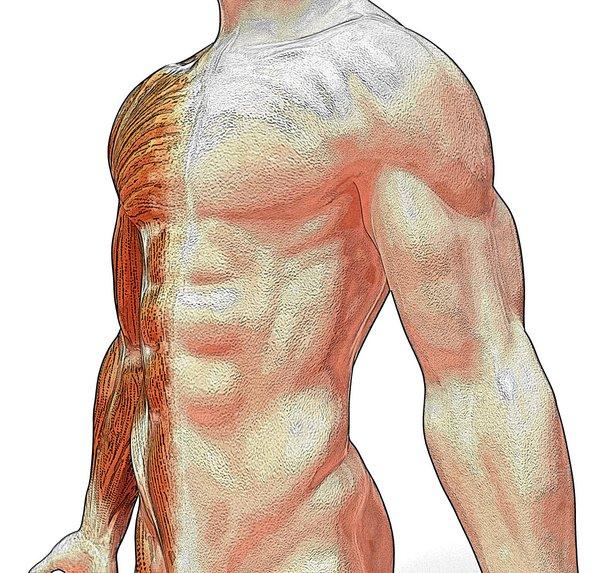 Bolest svalů se dá často léčit doma, přejde do dvou až tří dnů