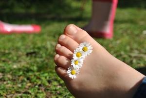 Dámská noha na louce s kopretinami mezi prsty.