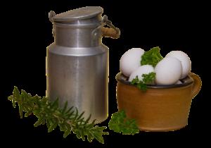 Síra v mléku a vejcích