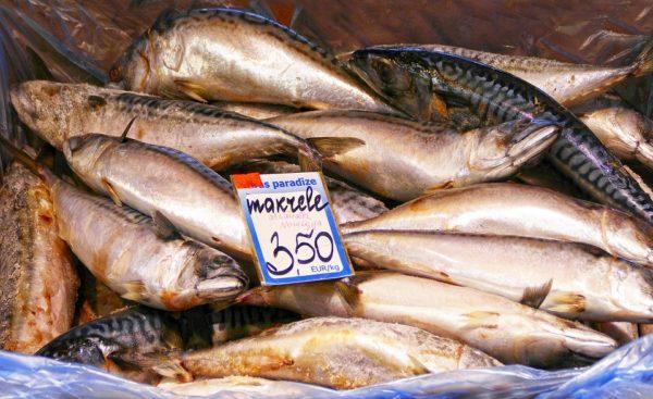 Makrela v troubě
