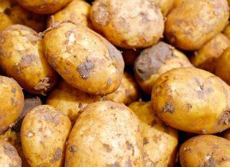 Samosběr brambor