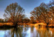 Bodnutí muchničkou u rybníku