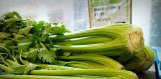 Pěstování celeru