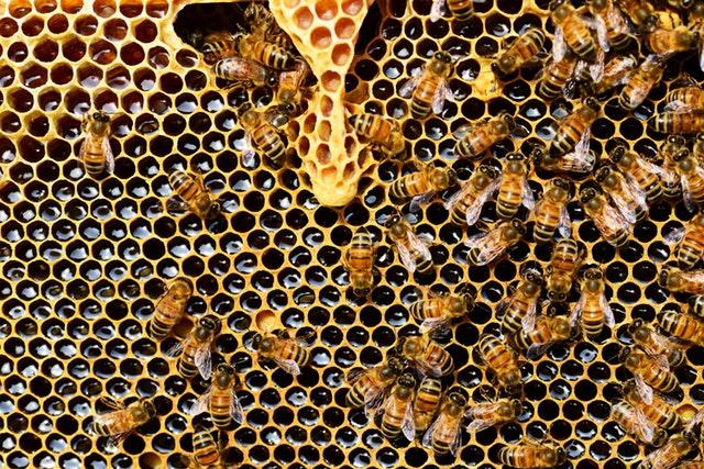 Mateří kašička - včelí produkt