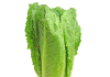 římský salát
