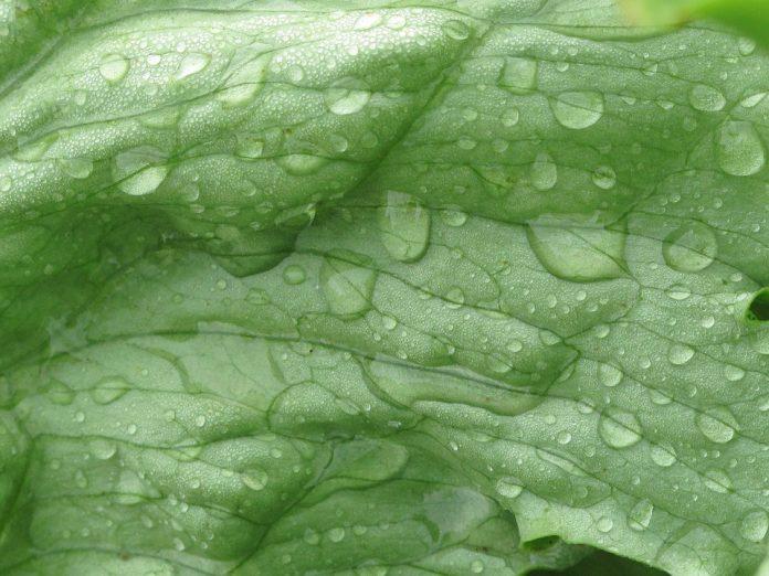 Ledový salát kapky vody