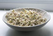 Naklíčené mungo fazole