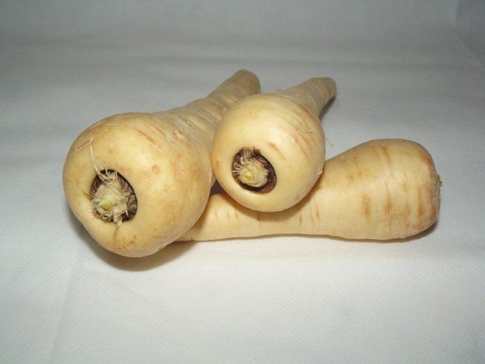 Petržel kořenová