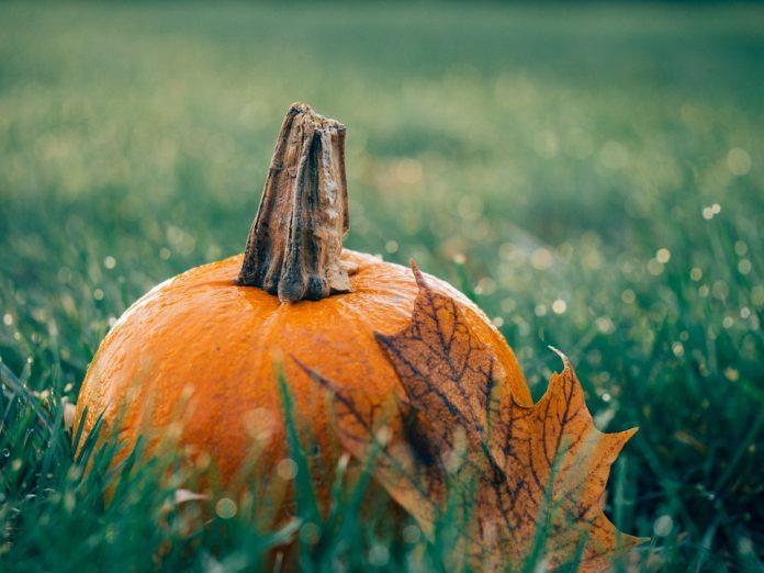 Podzimní dýně