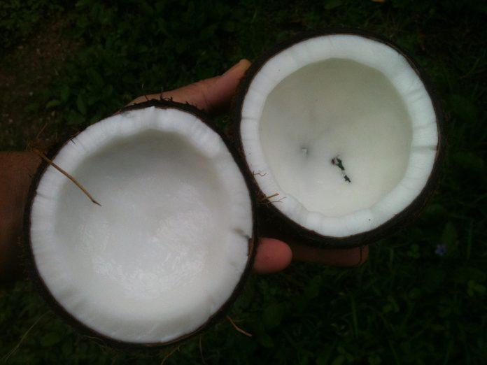 Kokos napůl
