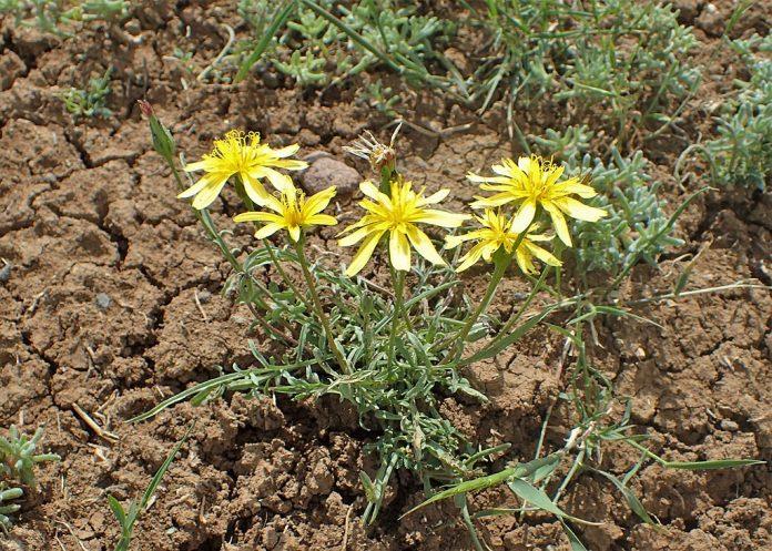 Černý kořen a květ