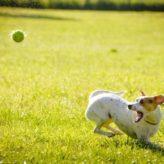 Také krmivo pro psy musí být zdravé a vyvážené
